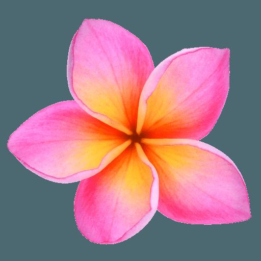 plumeria-favicon-hawaii