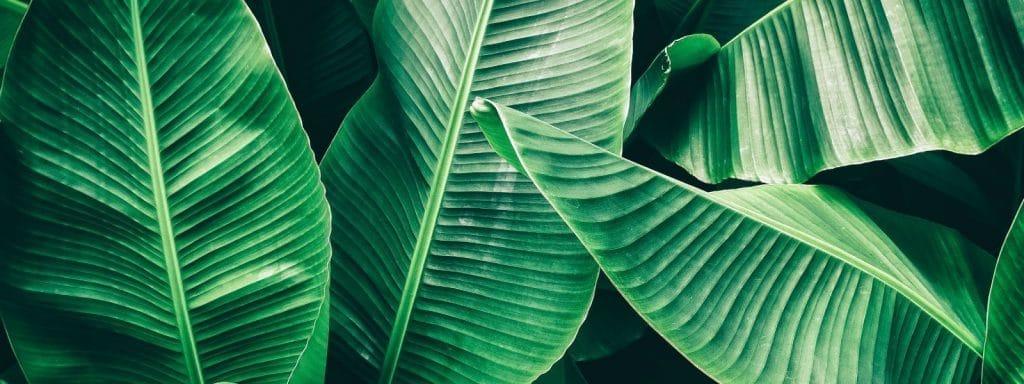 Palm-Leaf-Hawaiian-Tropical-Soap-Company,-Best-Coconut-Lotion